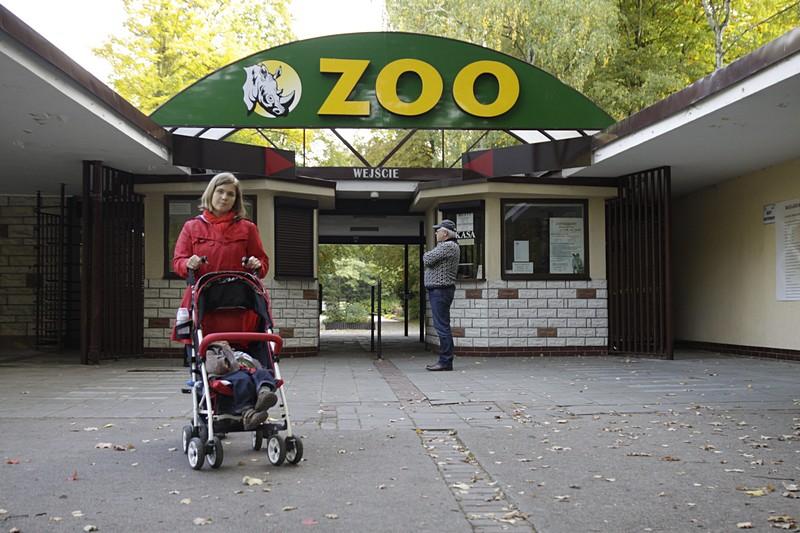 Z dzieckiem do Zoo (Nowe Zoo w Poznaniu)