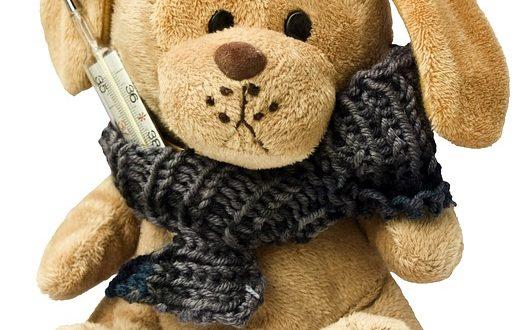 teddy-242878_640